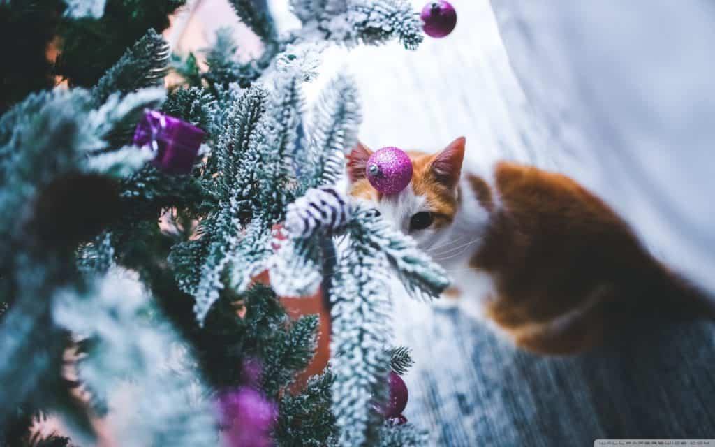 Idee regalo Natale beauty: ecco cosa mettere sotto l'albero per le amiche, la mamma, le colleghe.
