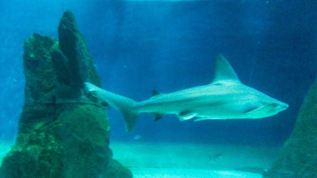La vasca degli squali all'Acquario di Genova