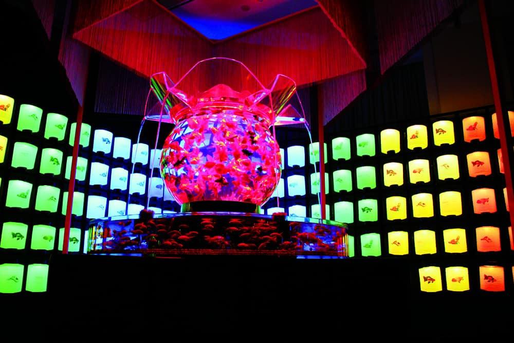 Art Aquarium, dal Giappone a Milano la mostra del pesce rosso<br/> (in prima internazionale centinaia di &#8220;Kingyo&#8221; in acquari)