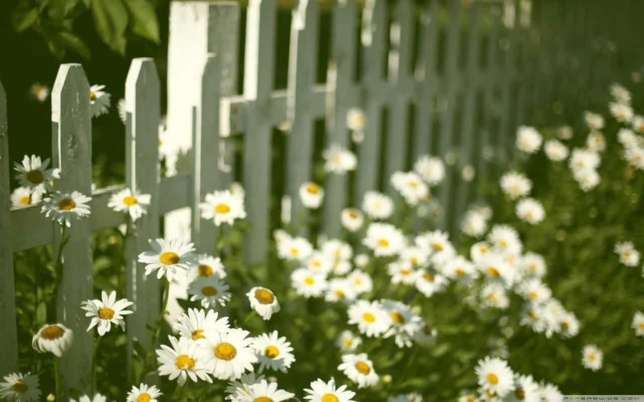 flowers_near_fence-wallpaper-1280x800