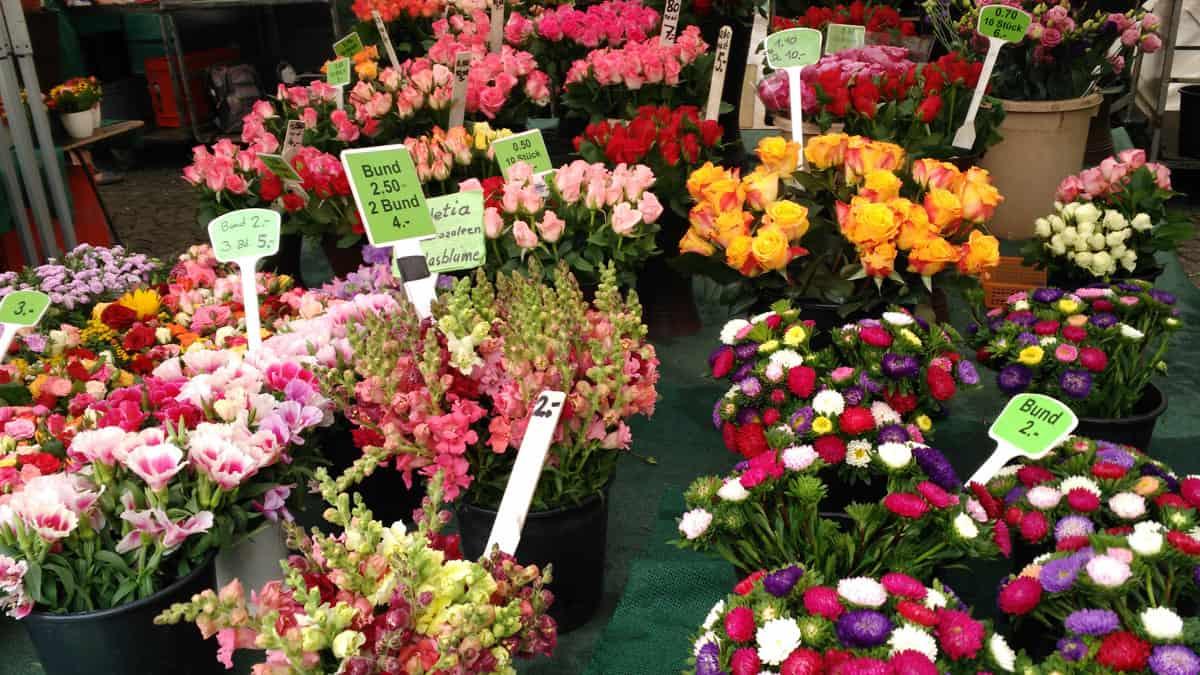 Il mercato dei fiori e della frutta a Stoccarda.
