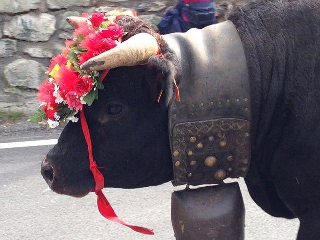 Deveteya Cogne 2015, appuntamento con la tradizione