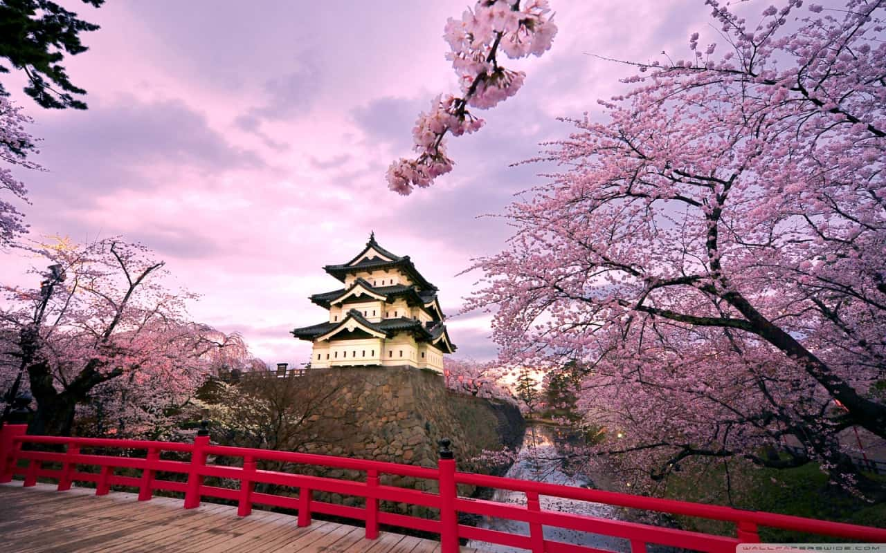 cherry_blossoms_japan_2-wallpaper-1280x800