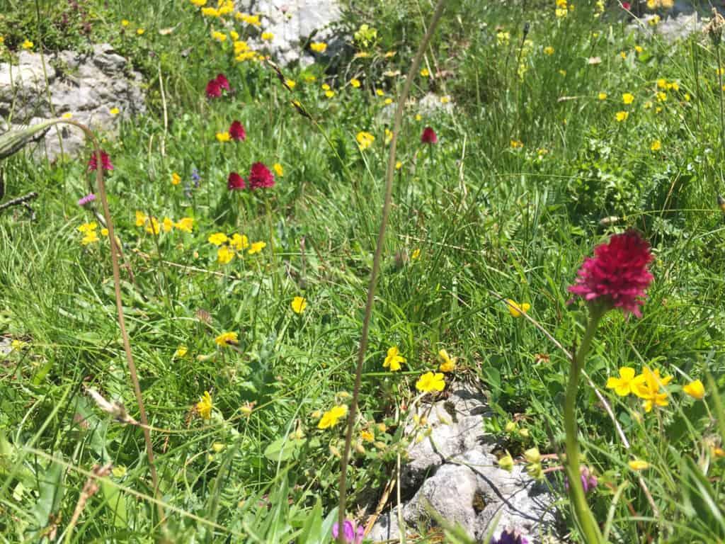 latemar escursioni fiori