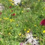 Vacanze estive in Alto Adige, 7 cose da non perdere