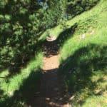Latemar escursioni facili sulle Dolomiti
