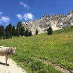 Val d Ega, montagna in estate sulle Dolomiti