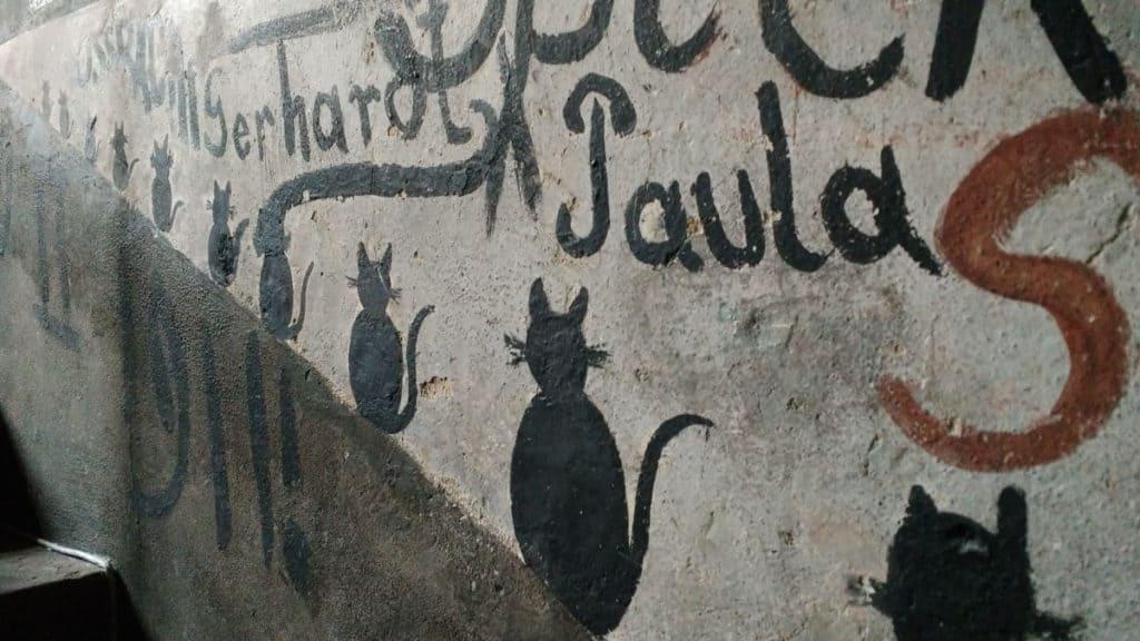 heidelberg carcere iscrizioni gatti