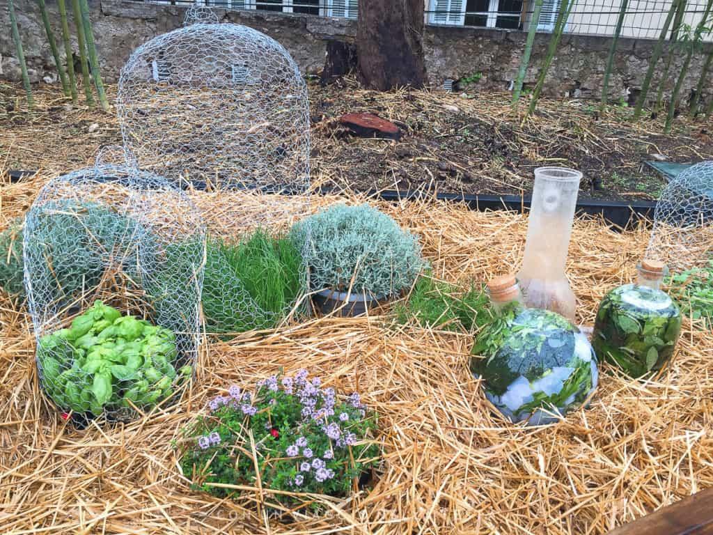 A Grasse per il Festival dei Giardini un percorso alla scoperta del profumo
