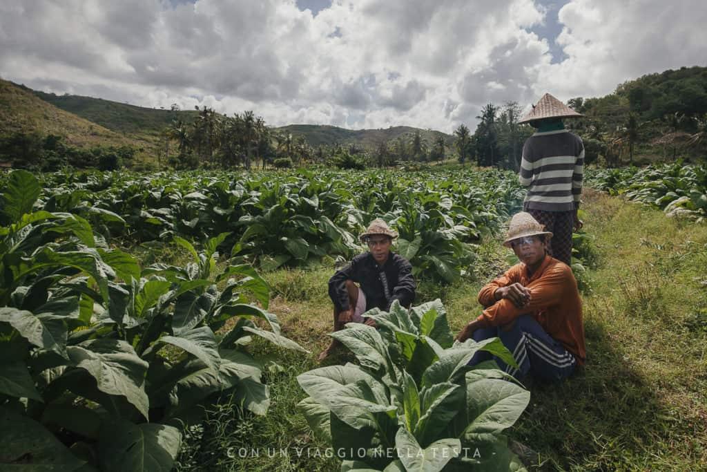 visitare lombok coltivazioni