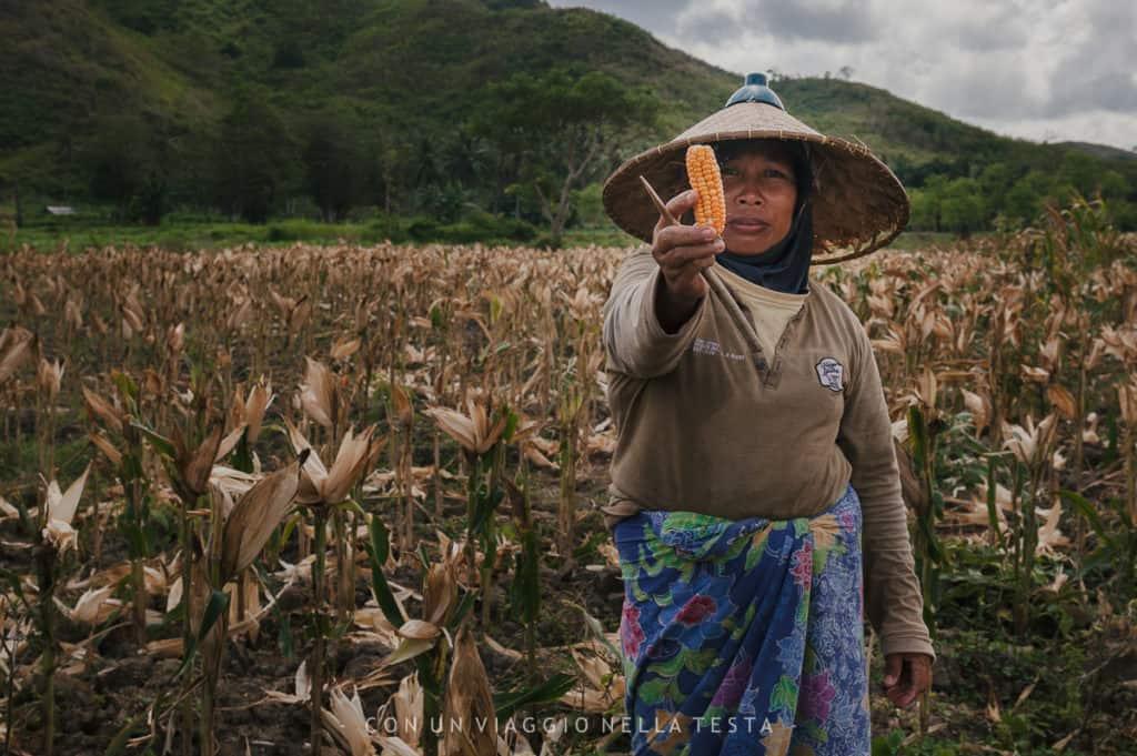visitare lombok donna campi