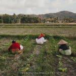 Cosa vedere a Lombok, l'isola che mi ha rubato il cuore – Indonesia