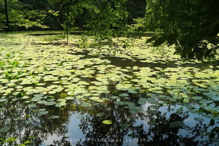Il laghetto con le Ninfee nel parco di Villa Carcano per una gita fuori porta da milano