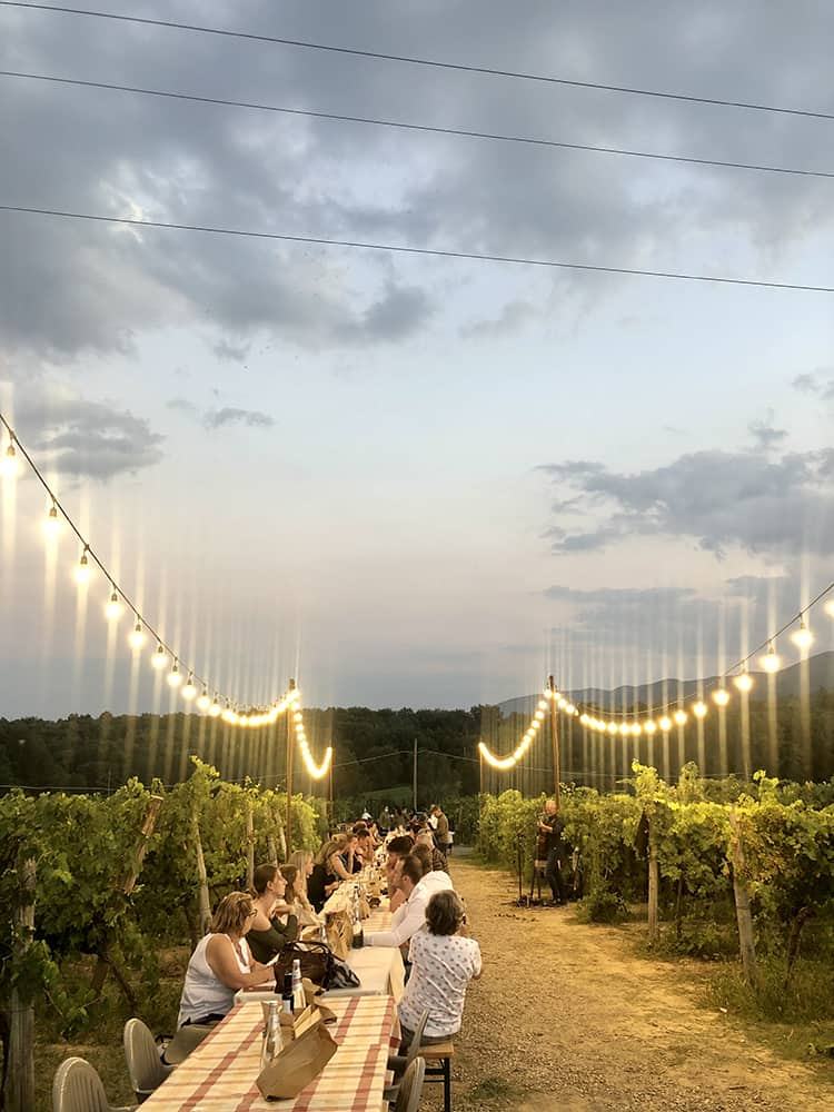 fattoria-palagina-vigna